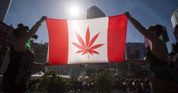 5 Days & Counting – Final Preparations Made Before Cannabis Goes Legal In Canada